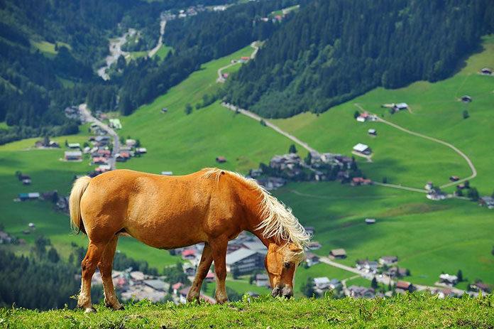 Turystyka jeździecka