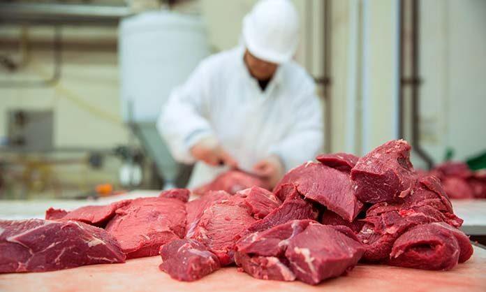 Jak kupować wilki do mięsa